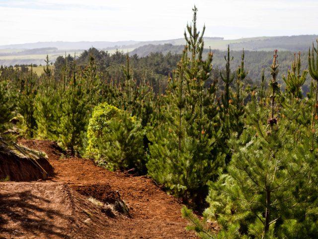 NUEVO BIKEPARK de Trail Jumps